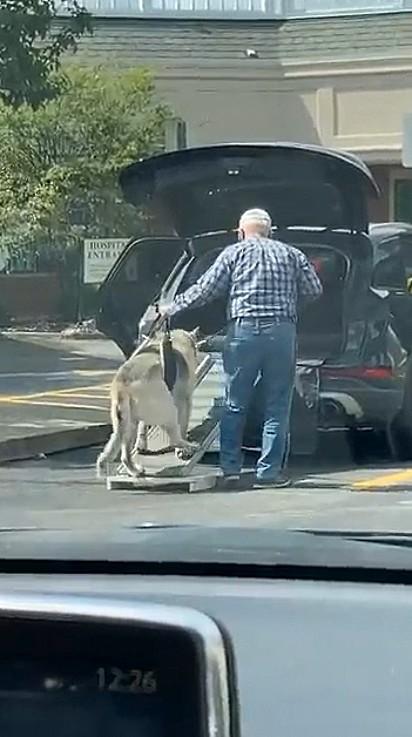 Idoso foi flagrado ajudando o seu cão, também idoso, a entrar no carro.