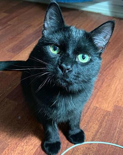 O gatinho Simon.