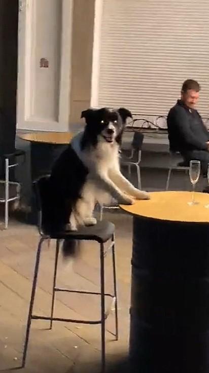 O cachorrinho só observando o dono.