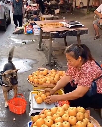 O cachorrinho foi à feira comprar frutas.
