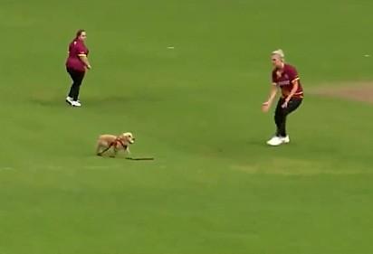 O cão entrou no campo para roubar a bola das jogadoras.