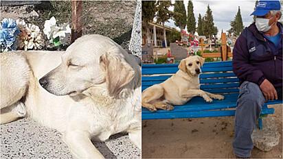 Cão se nega a voltar para casa e passa a viver no cemitério em que seu dono foi enterrado.