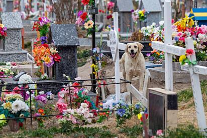 O cachorrinho vive no local há três anos.