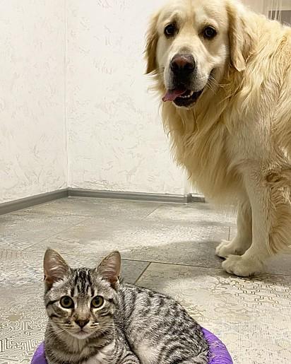 Bailey com o seu irmão.
