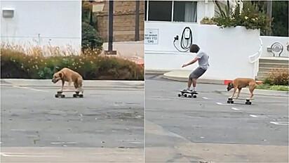 Cachorro vira-lata caramelo é flagrado andando de skate.