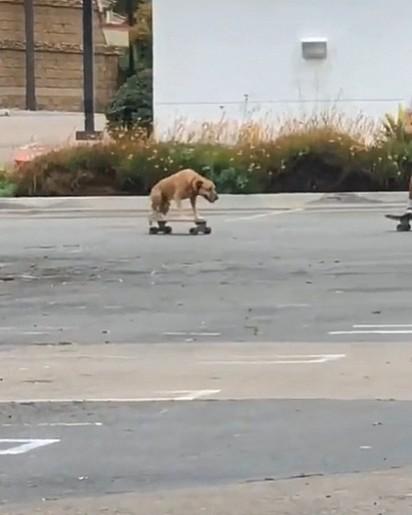 O caramelo arrasou no skate.