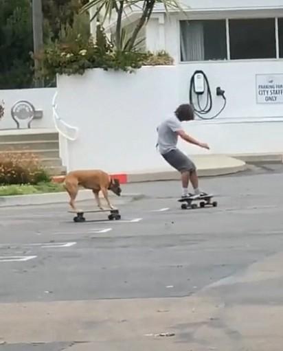 O cachorrinho estava acompanhado de outro skatista.