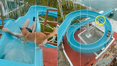 Vira-lata caramelo é filmada se divertindo em toboágua.