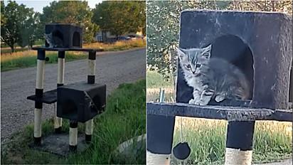 Mulher adota gatinha que encontrou no arranhador dos seus gatos, que havia colocado no pátio para secar.