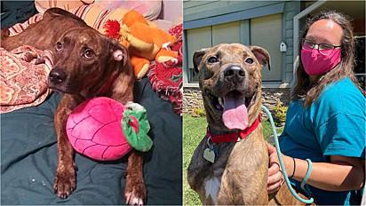 Cão é aplaudido de pé por sua adoção, após passar 260 dias em abrigo de animais.