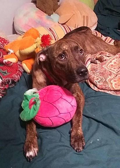 O cachorrinho foi deixado no abrigo de animais por seus antigos donos.