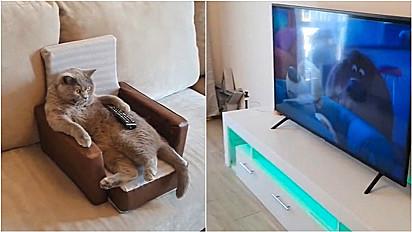Gatinho é flagrado assistindo desenho animado confortavelmente em seu estofado.
