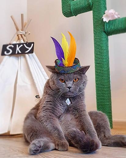 O gatinho Sky Cat.