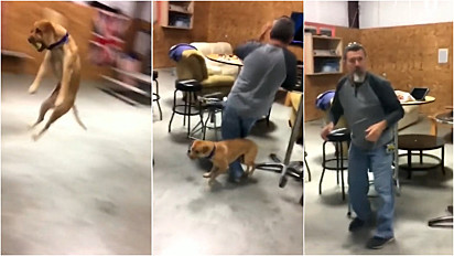Em brincadeira de bolinha, cachorro caramelo quase dá voadora em homem.