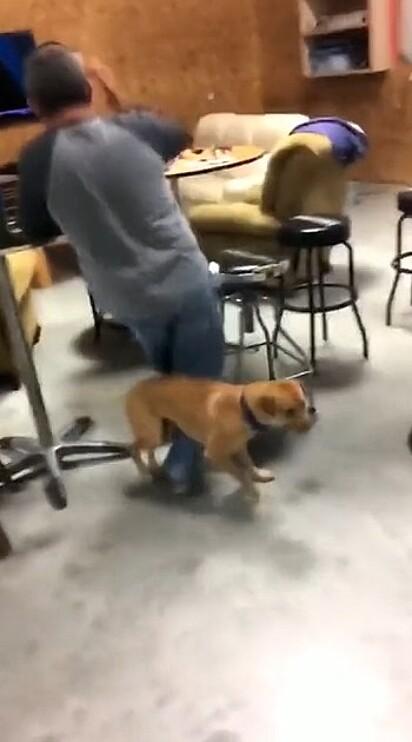Sem querer o cão aterrissou na panturrilha de um homem que estava por perto.