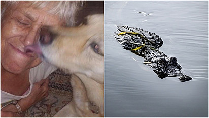 Idosa se arrisca para salvar seu cão de ataque de crocodilo.