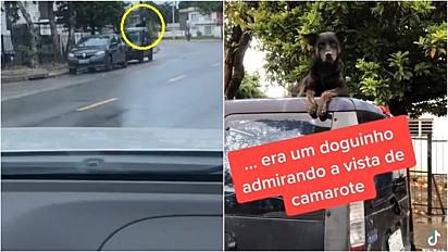 Mulher flagra cachorro descansando no teto de carro estacionado.