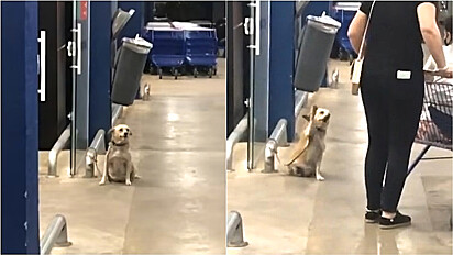 Cachorro é visto cumprimentando pessoas em frente do supermercado.