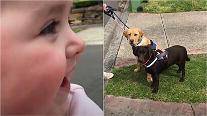 Bebê fica em êxtase ao ver cachorros pela primeira vez.