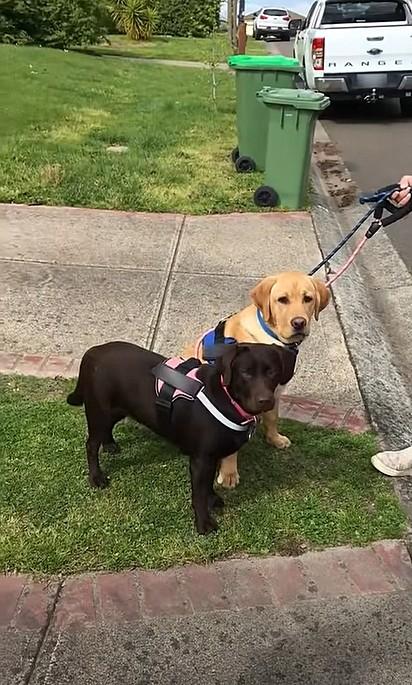 Os cães estavam passeando com a sua dona quando a bebê os viu.