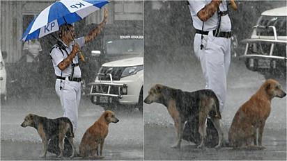 Policial de Calcutá, na Índia, é fotografado protegendo cachorros sob guarda-chuva.