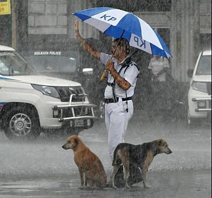 Policial foi flagrado protegendo dois cães da chuva com guarda-chuva.