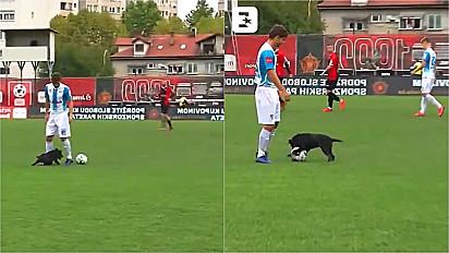 Cachorro invade partida de futebol na Bósnia e dribla três jogadores.