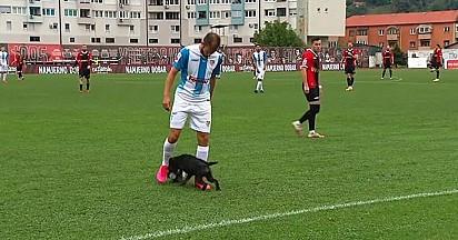 O cãozinho driblou três jogadores.