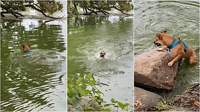 Cachorro se diverte em água até observar um mostro e fugir.
