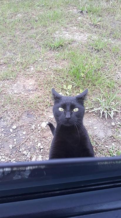 A carinha de pidão do gato Douglinhas.