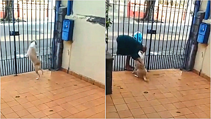 Cachorra cria amizade e aguarda morador de rua passar em frente a sua casa para ganhar carinho.