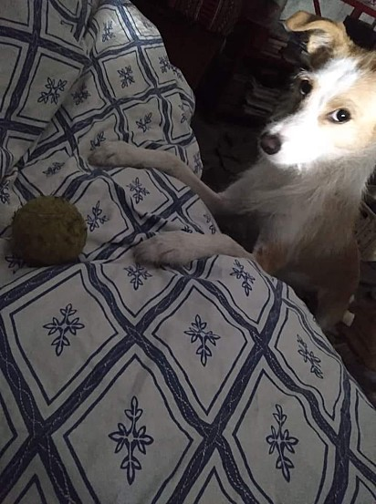 A cachorrinha Mimi.