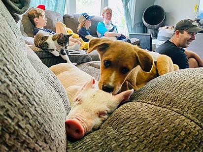 Winne e Wilma estão deitados no sofá, ambos quase dormindo