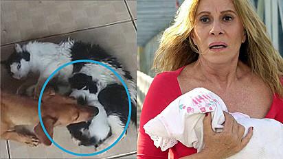 Gata dá à luz e cachorra sequestra os seus filhotes. Nazaré Tedesco versão pet?