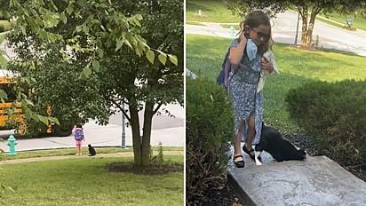 Gato espera menina entrar em ônibus escolar todos os dias.