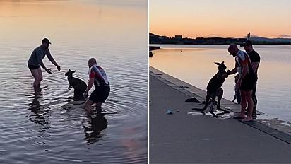 O animal foi retirado do lago por dois homens e deixado às margens.