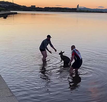 Dois homens tentando resgatar o canguru do lago