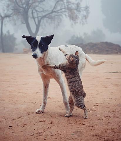 Cachorro e gato. Segundo a Organização Mundial da Saúde, o Brasil possui cerca de 10 milhões de gatos e 20 milhões de cães abandonados.