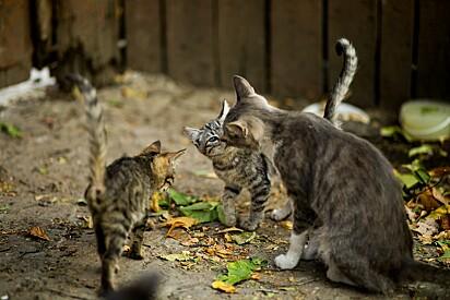 Gata e seus filhotes: um retrato da superpopulação de animais de rua e necessidade do controle de natalidade.