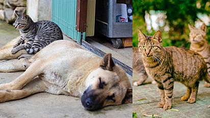 Deputados aprovam projeto que proíbe eutanásia de cães e gatos por órgãos públicos.