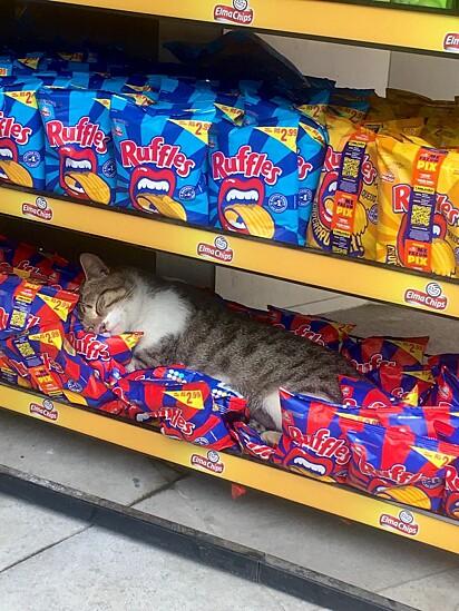 Gatinho está dormindo em cima de pacotes de salgadinho