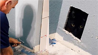 Durante reforma gato fica preso em parede, dona ouve o miado no banheiro e pai faz buraco na parede para tirá-lo.