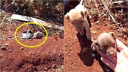 Caminhoneiro resgata três filhotes de cachorros abandonados em beira de estrada.