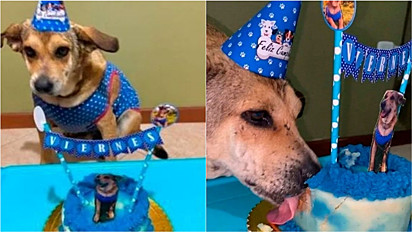 Família faz linda festa para comemorar aniversário do seu cachorro.