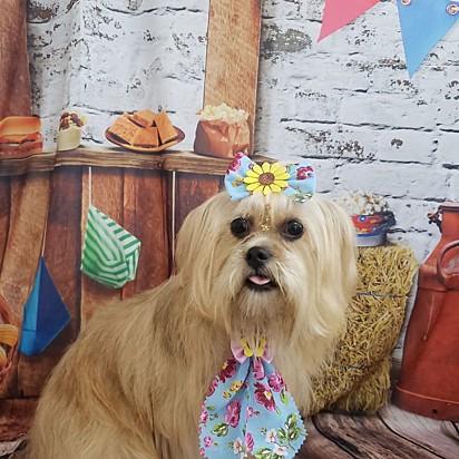 A cachorrinha Gabriela.