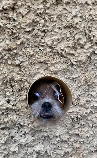 A carinha de curiosa.