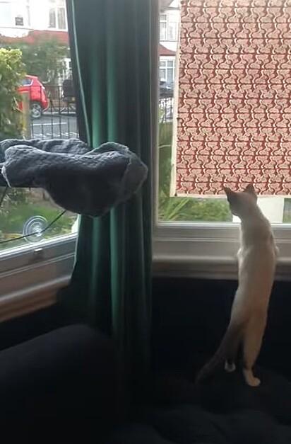 O gatinho estica a cabeça para ver a sua amiga partir.