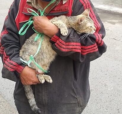 O gatinho foi adotado por uma mulher que vive na região.