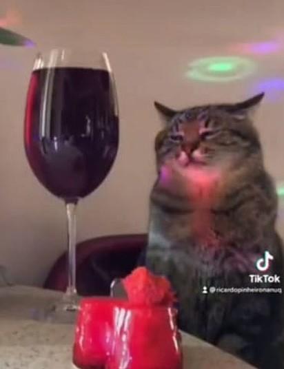 Um gato está tranquilo ao lado de uma taça de vinho