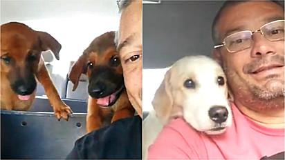 Motorista grava vídeos encantadores ao lado dos seu passageiros caninos.